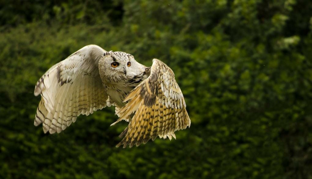 10-great-things-in-new-forest-owl-reptile-centre