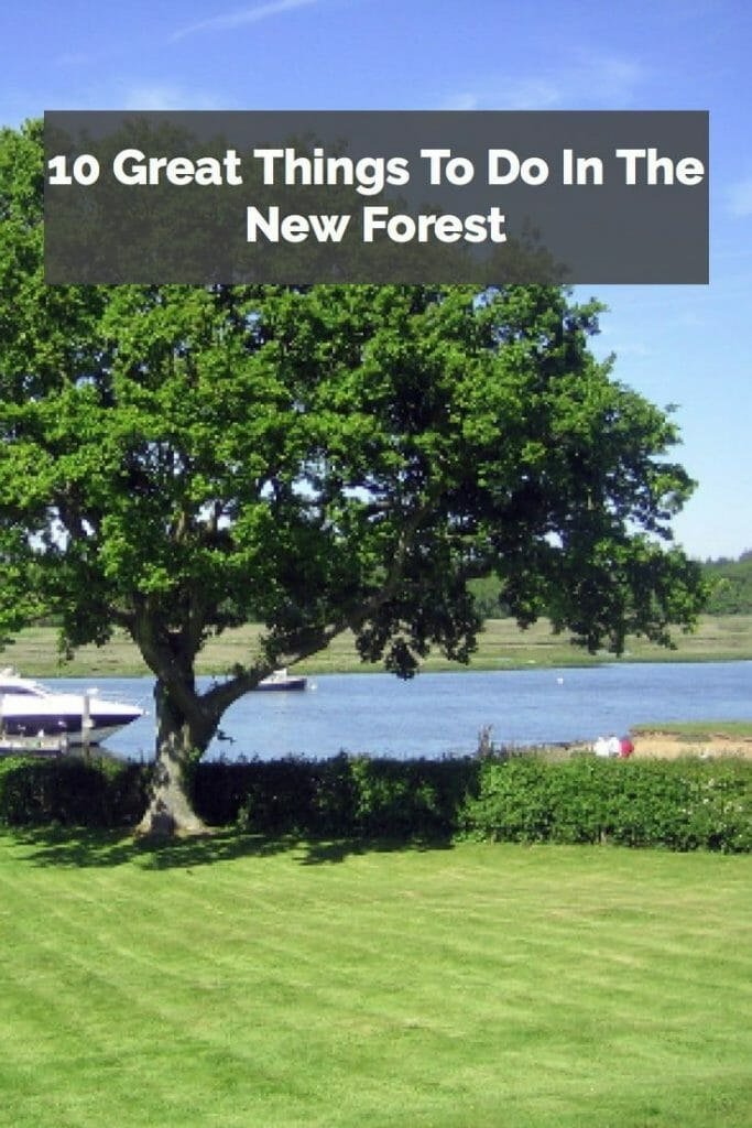 10 Great Places In the New Forest