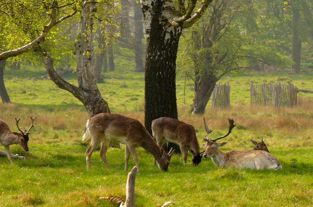 20-best-parks-london-richmond-park