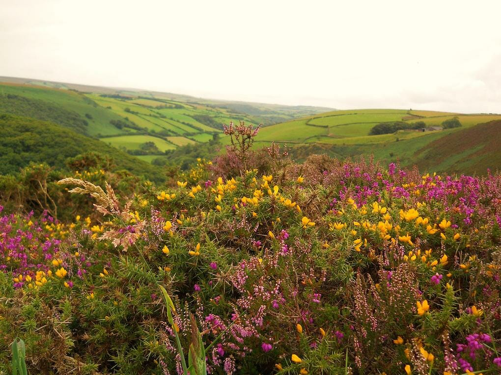 20-best-walking-trails-exmoor