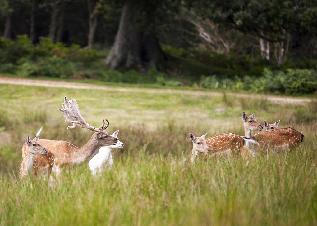 10-great-things-in-new-forest-bolderwood-deer-sanctuary