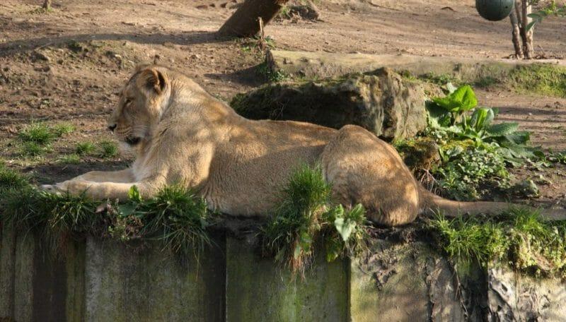 London Zoo photo
