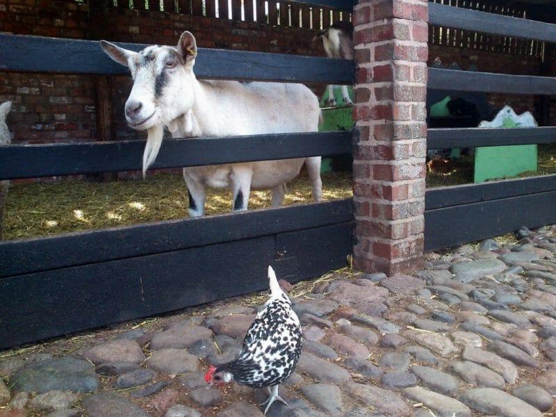 cheshire england farm photo