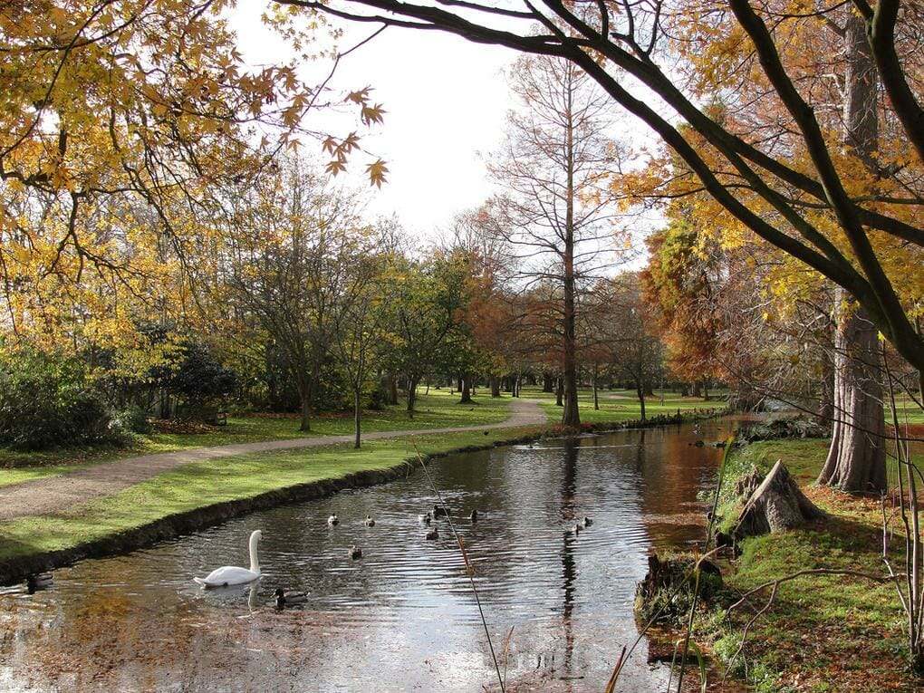 20-best-parks-london-bushy-park