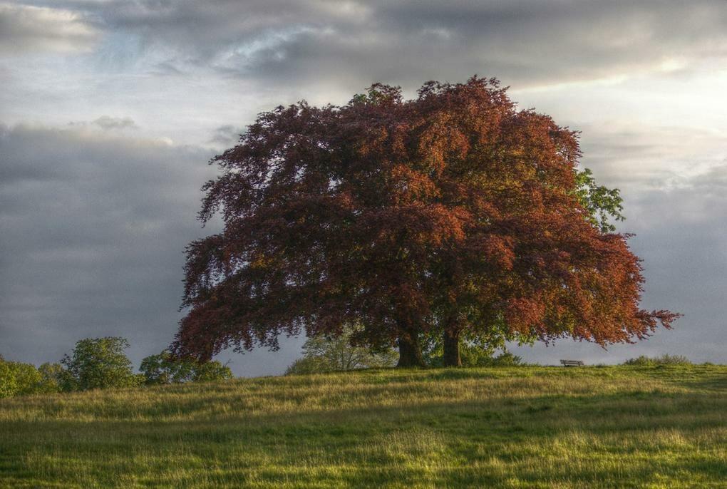 20-best-parks-london-hampstead-heath