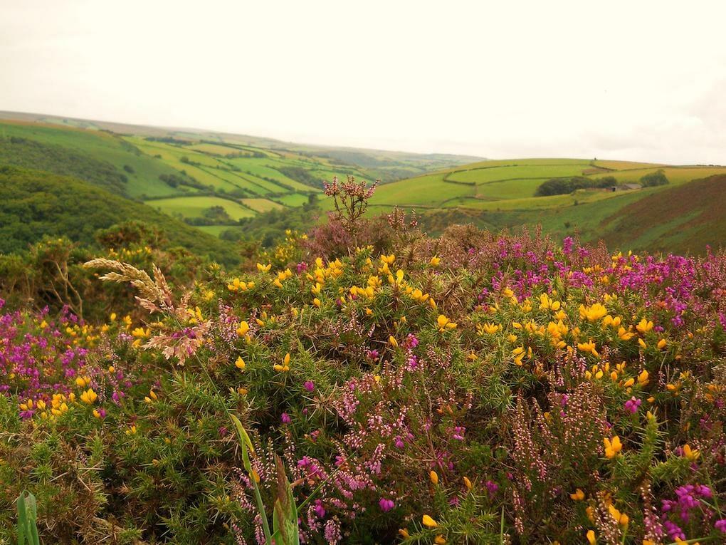 20-best-walking-trails-exmoor