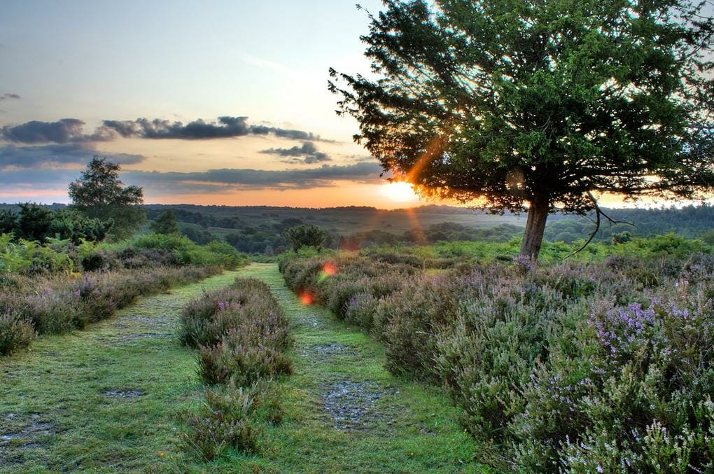20-best-walking-trails-new-forest