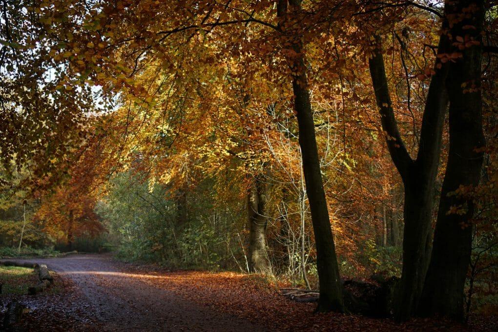 Savernake Forest photo