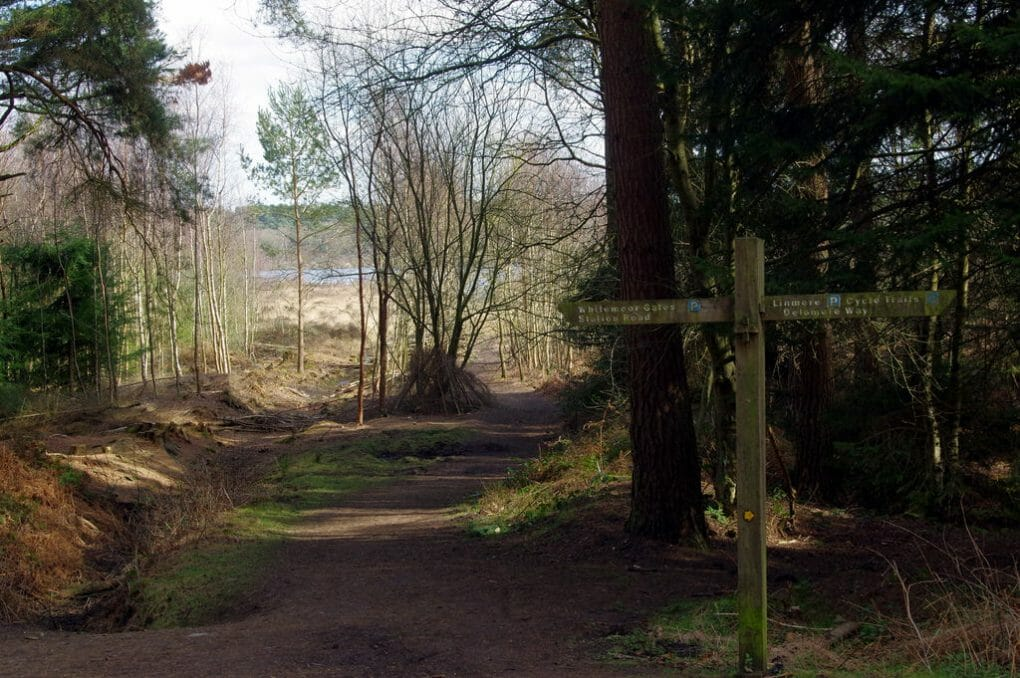 Delamere Forest photo