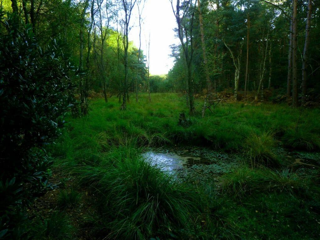 Swinley Forest photo
