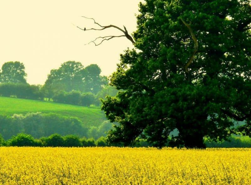 Strange English Place Names: Herefordshire photo
