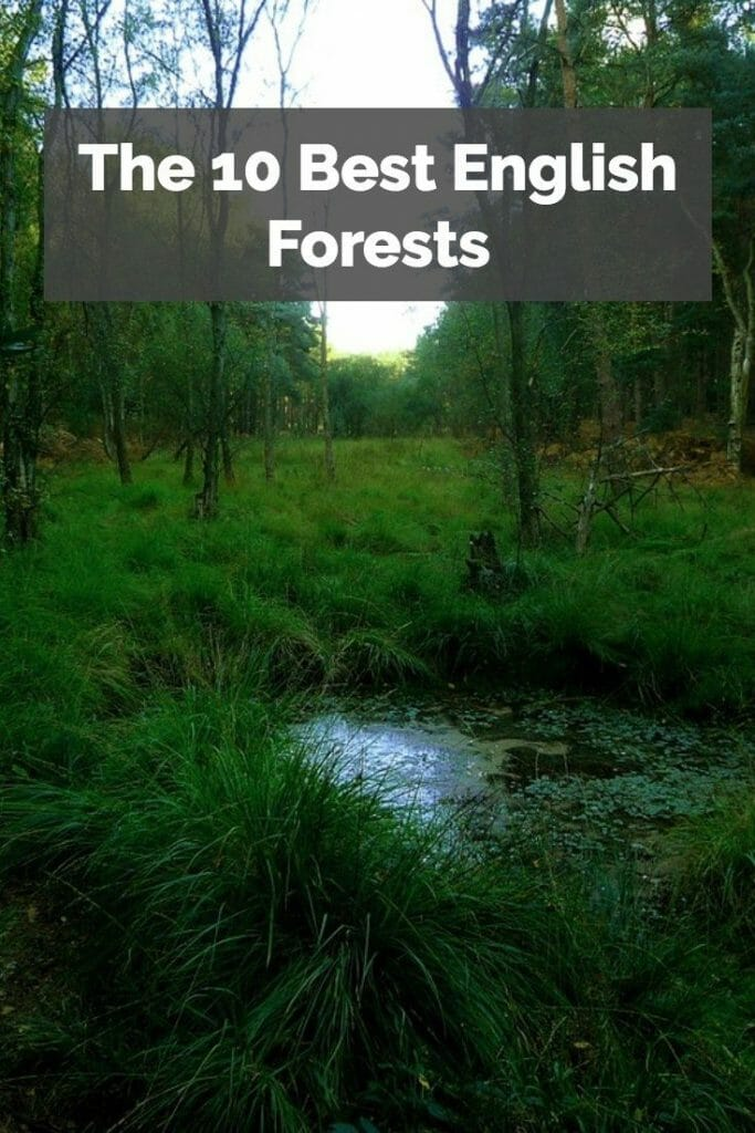 English Forest Pinterest