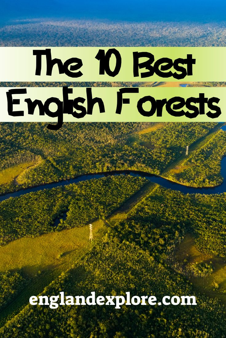 English Forests