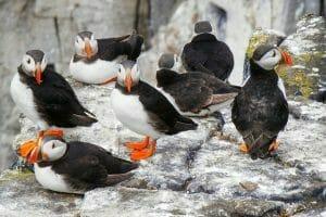 british coastal wildlife