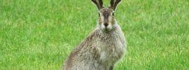 mammals of the UK