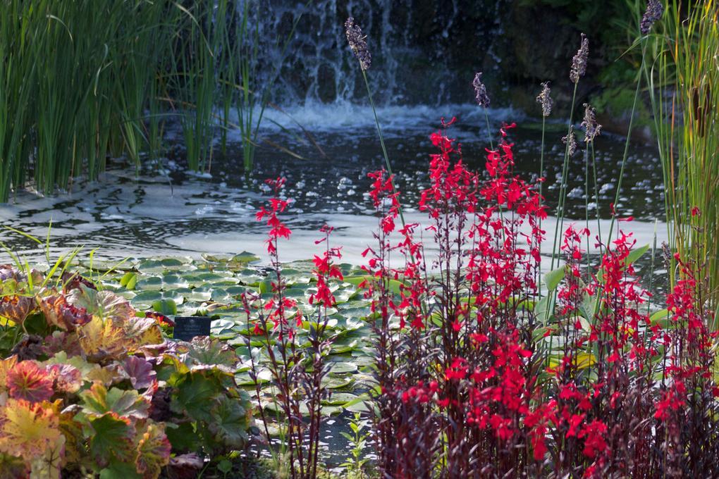 region-in-focus-west-london-kew-gardens