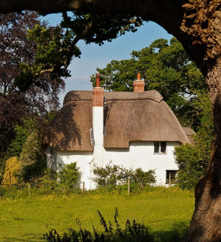 A pretty thatched cottage framed by an old Oak tree at Highwood in Hampshire
